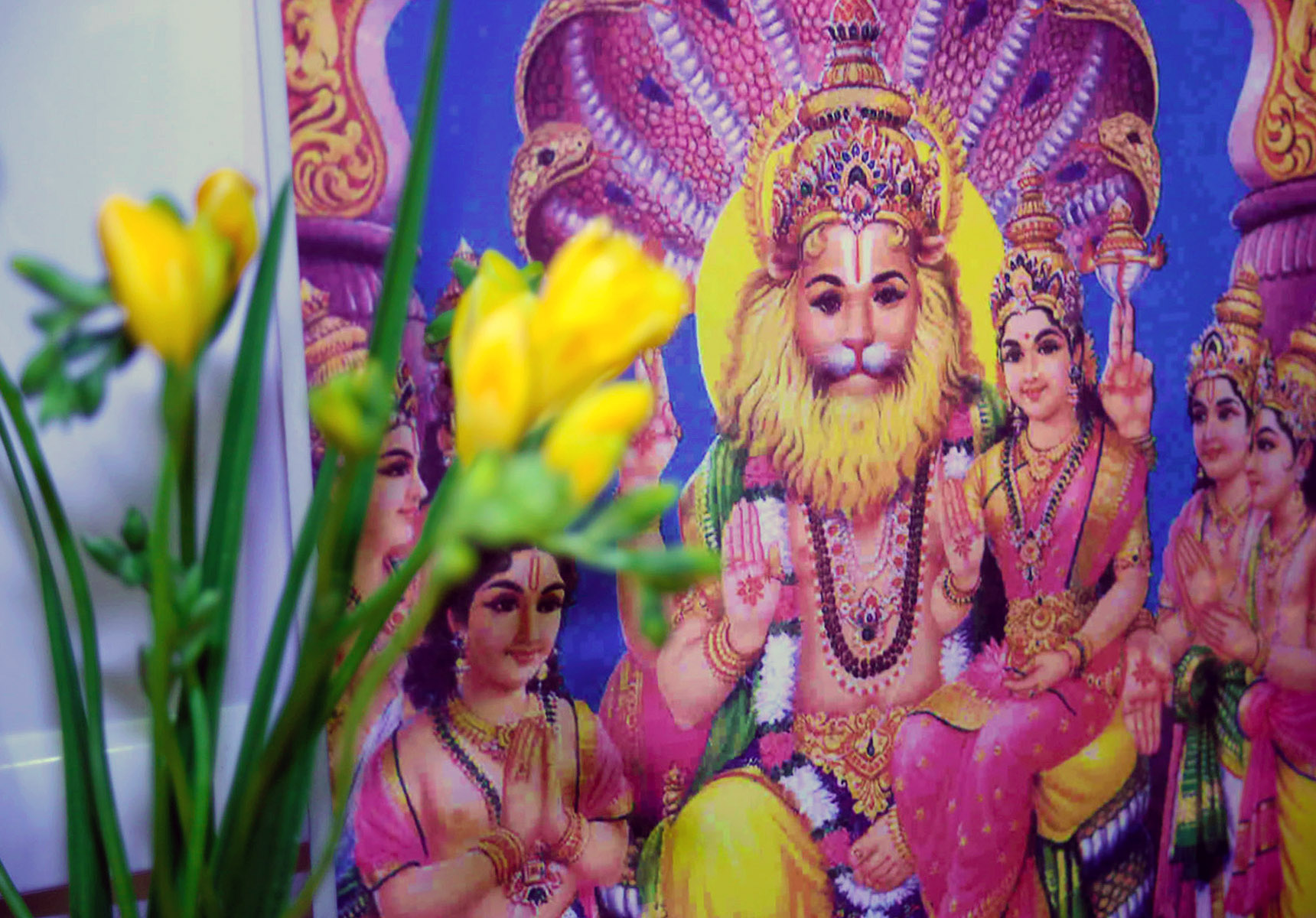 Vishwaguruji's blessings on the occasion of Holi